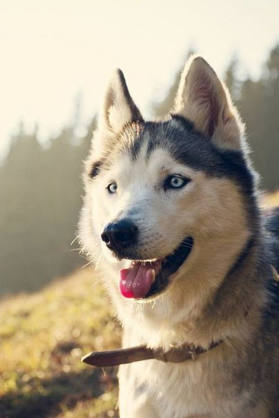 fotos-perros-naturaleza-21