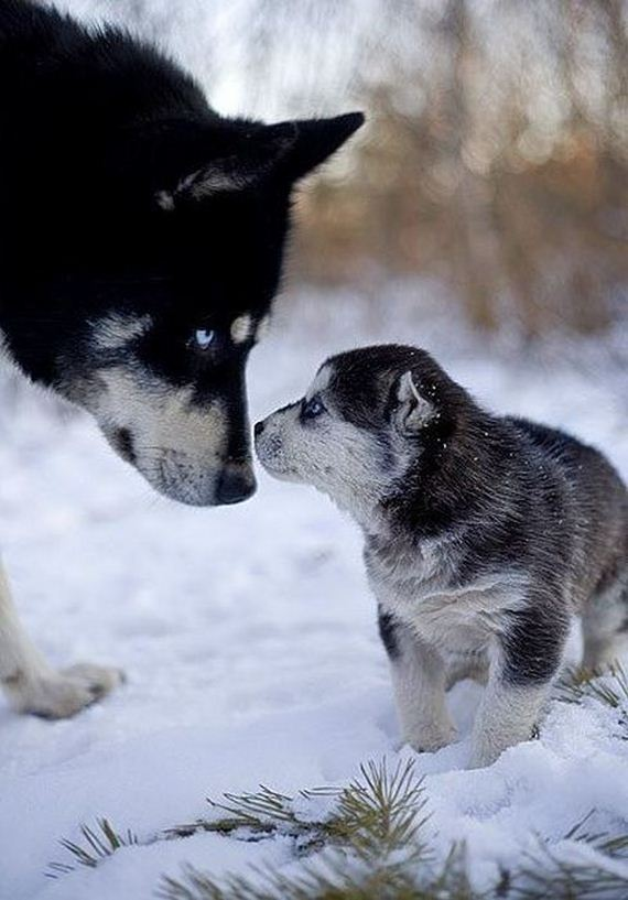 fotos-perros-naturaleza-23
