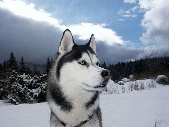 fotos-perros-naturaleza-24