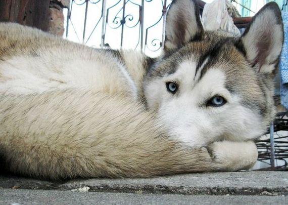 fotos-perros-naturaleza-25