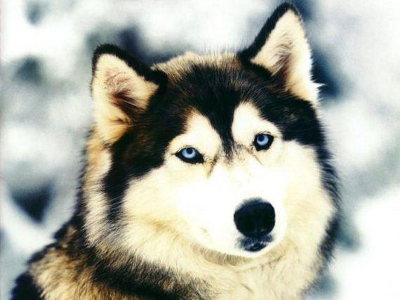 fotos-perros-naturaleza-27