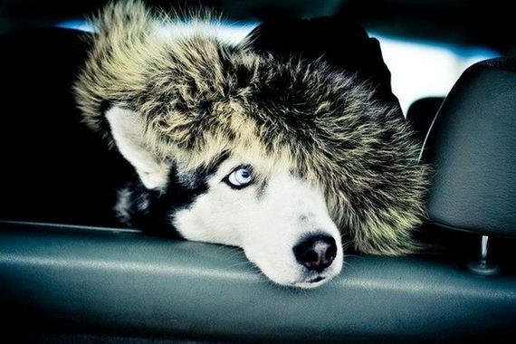 fotos-perros-naturaleza-29
