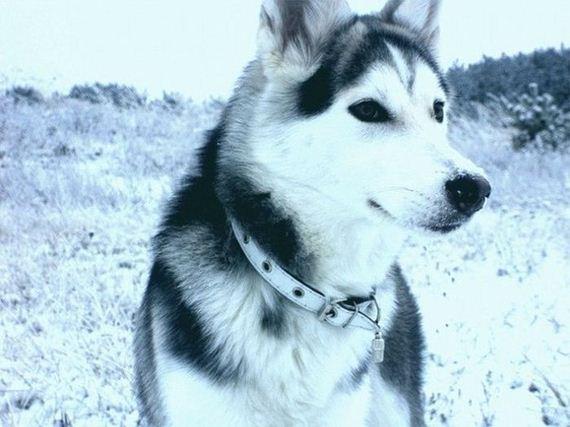 fotos-perros-naturaleza-33