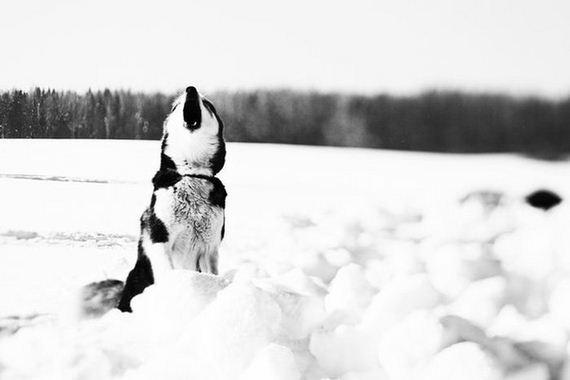fotos-perros-naturaleza-34