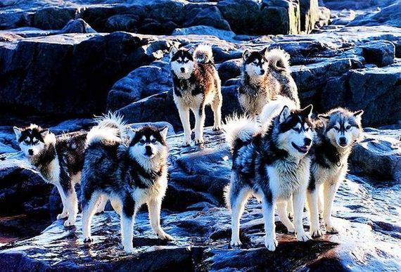 fotos-perros-naturaleza-35