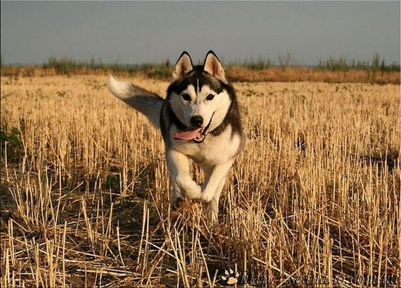 fotos-perros-naturaleza-36