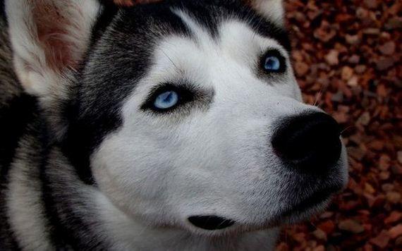 fotos-perros-naturaleza-37
