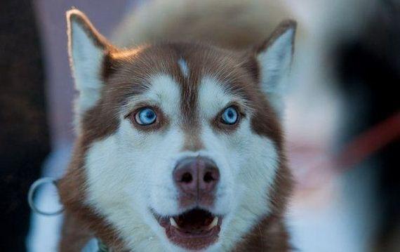 fotos-perros-naturaleza-39