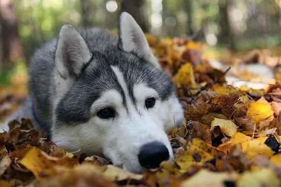 fotos-perros-naturaleza-43