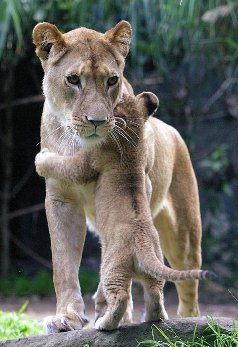 abrazando-mama