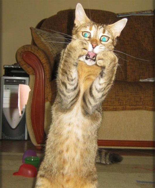 miedo-gato