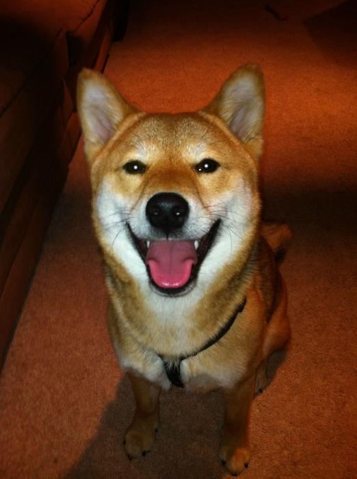 perro-sonriendo