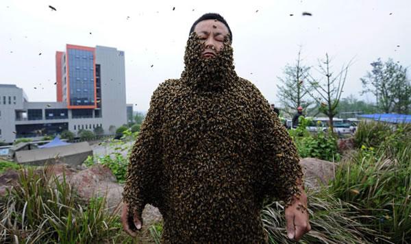abejas-cuerpo