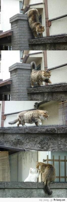 amor-gatos