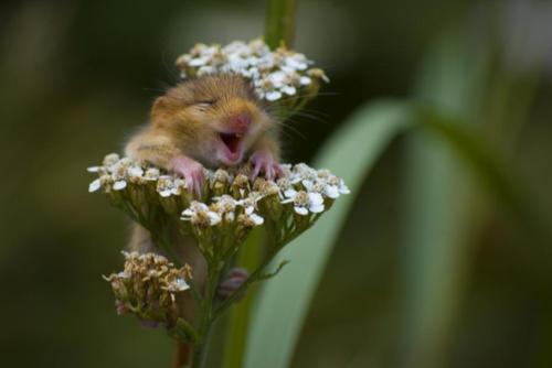 animal-feliz-2