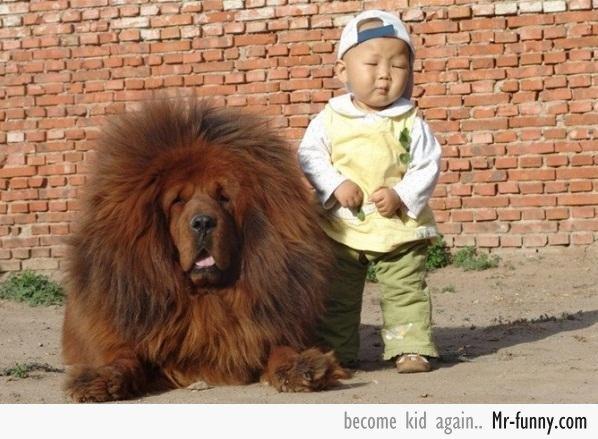 bebe-dog