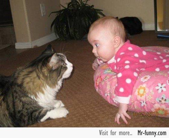 bebe-gato-2