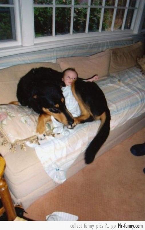 bebe-perro-11