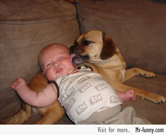 bebe-perro-3