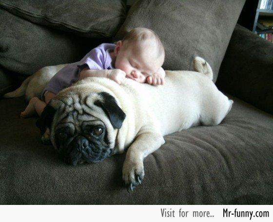 bebe-perro-4