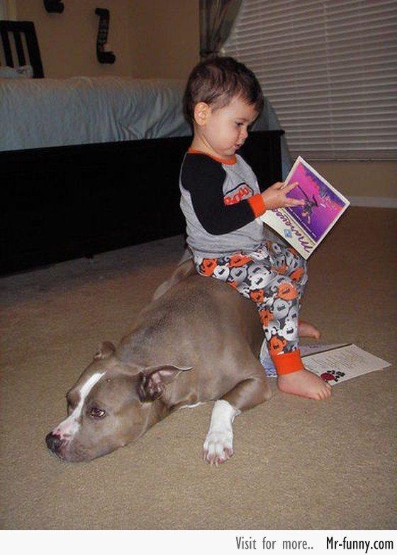 bebe-perro-5