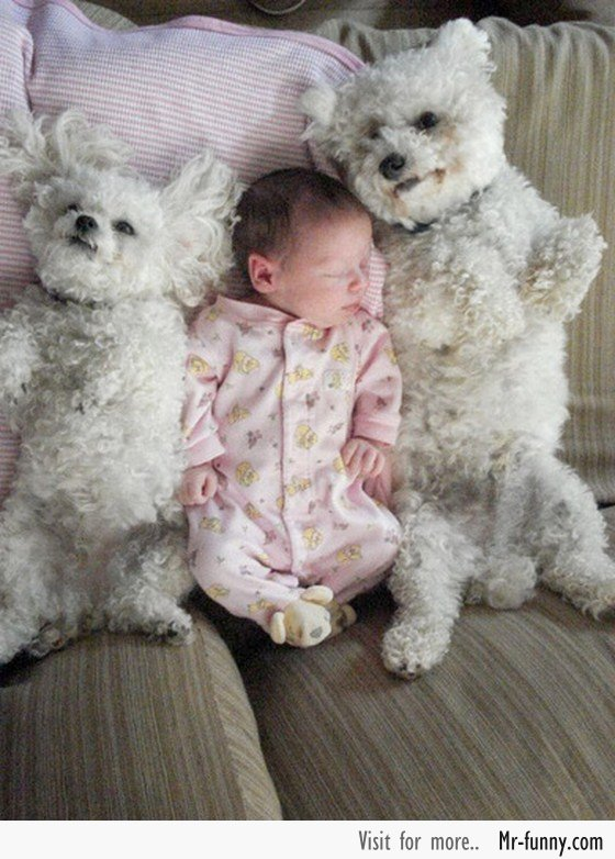 bebe-perro-7