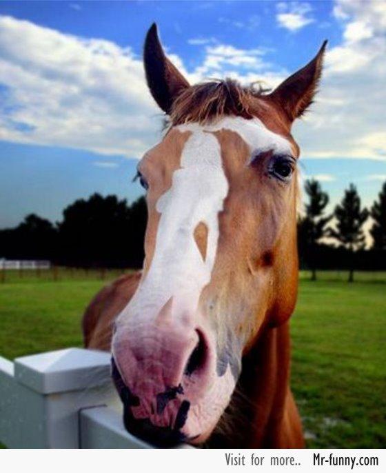 caballo-imagen