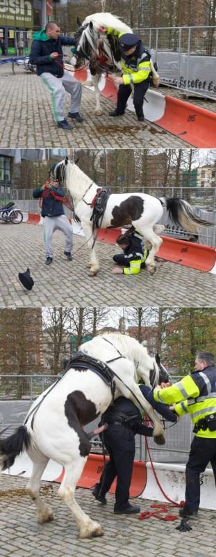 caballo-policia