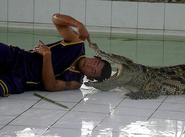 cabeza-cocodrilo