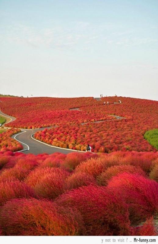 campos-japan