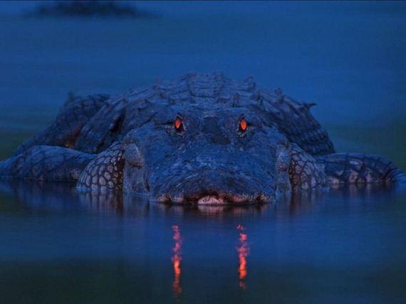 cocodrilo-noche