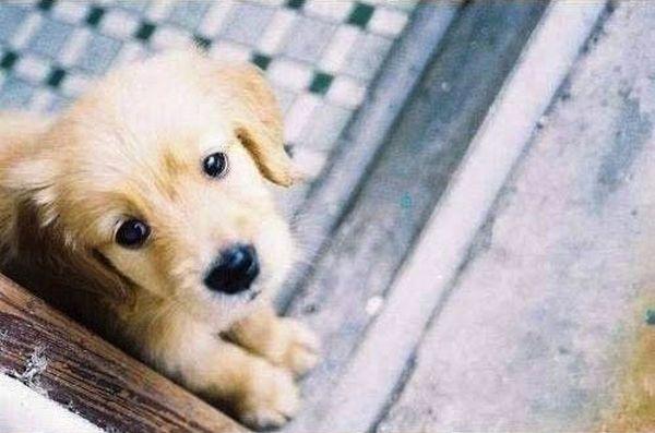 crias-perros-perritos-10