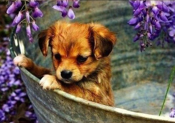 crias-perros-perritos-13