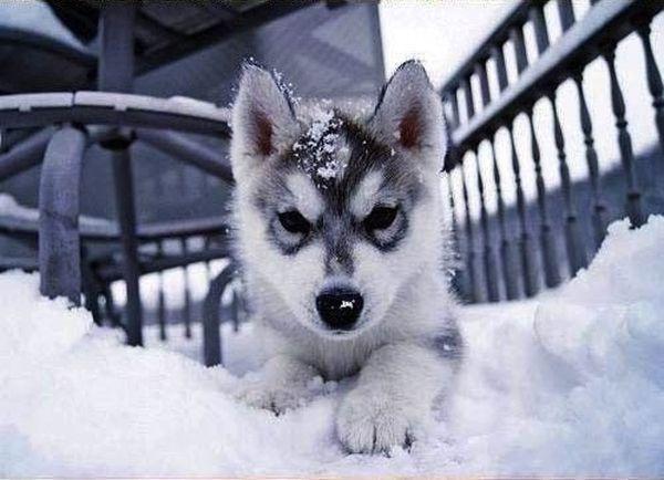 crias-perros-perritos-20