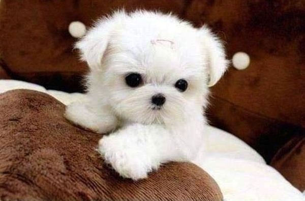 crias-perros-perritos-23