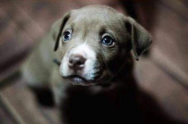 crias-perros-perritos-27
