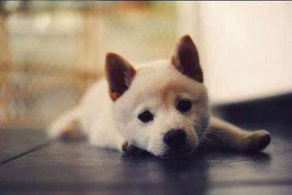 crias-perros-perritos-28