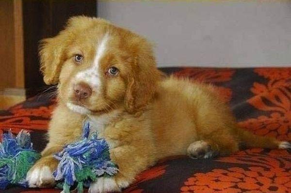 crias-perros-perritos-29