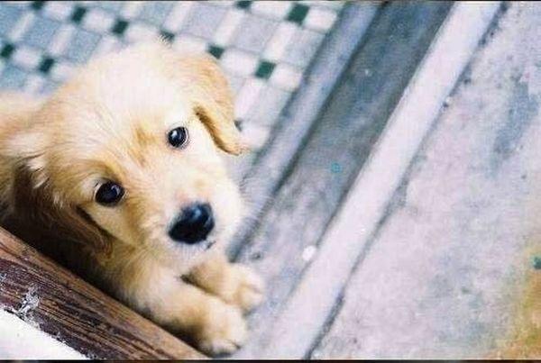 crias-perros-perritos-38