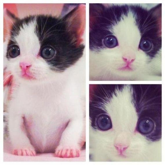 gatitos-crias-gatos-01