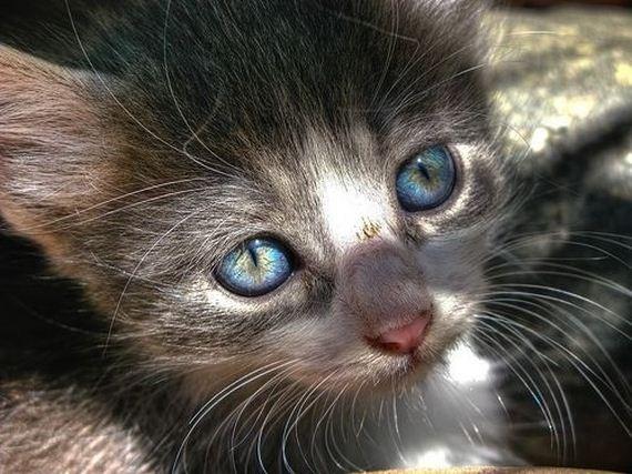 gatitos-crias-gatos-03