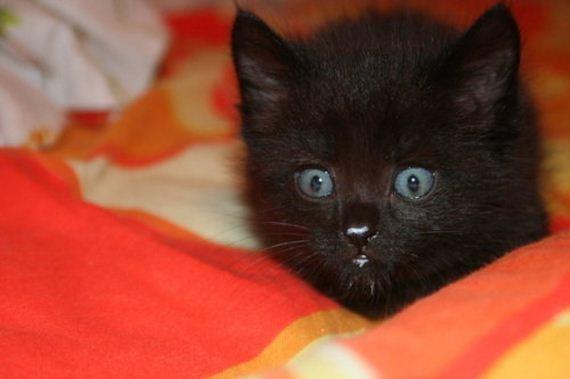 gatitos-crias-gatos-04