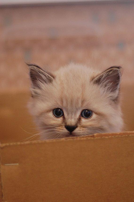 gatitos-crias-gatos-06