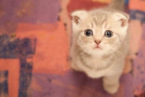gatitos-crias-gatos-08