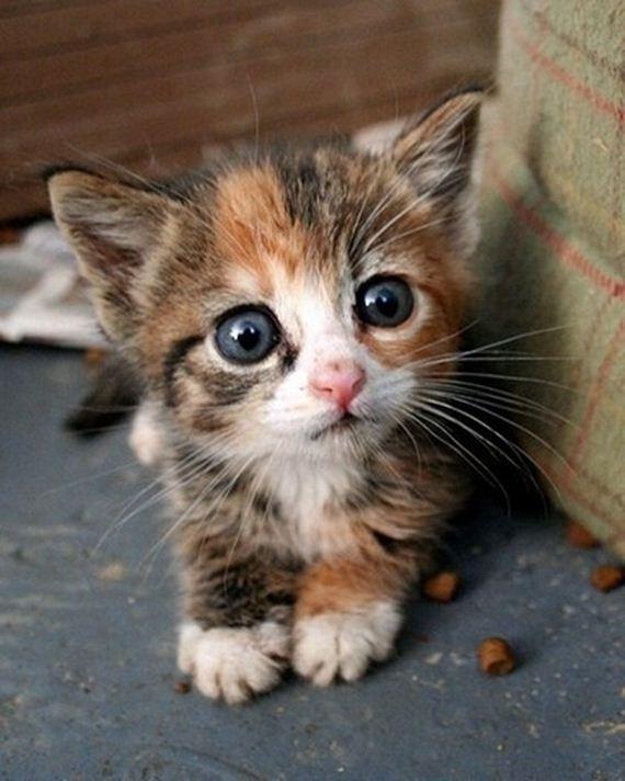 gatitos-crias-gatos-09