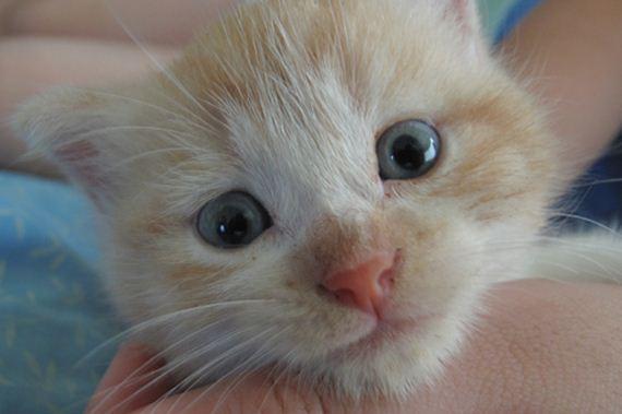 gatitos-crias-gatos-10