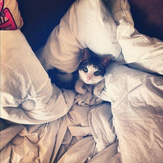 gatitos-crias-gatos-11