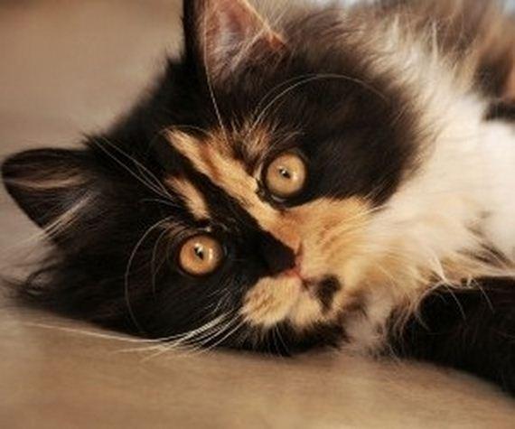 gatitos-crias-gatos-12