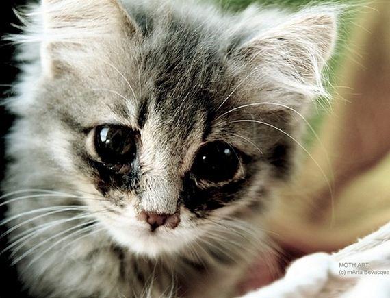 gatitos-crias-gatos-13