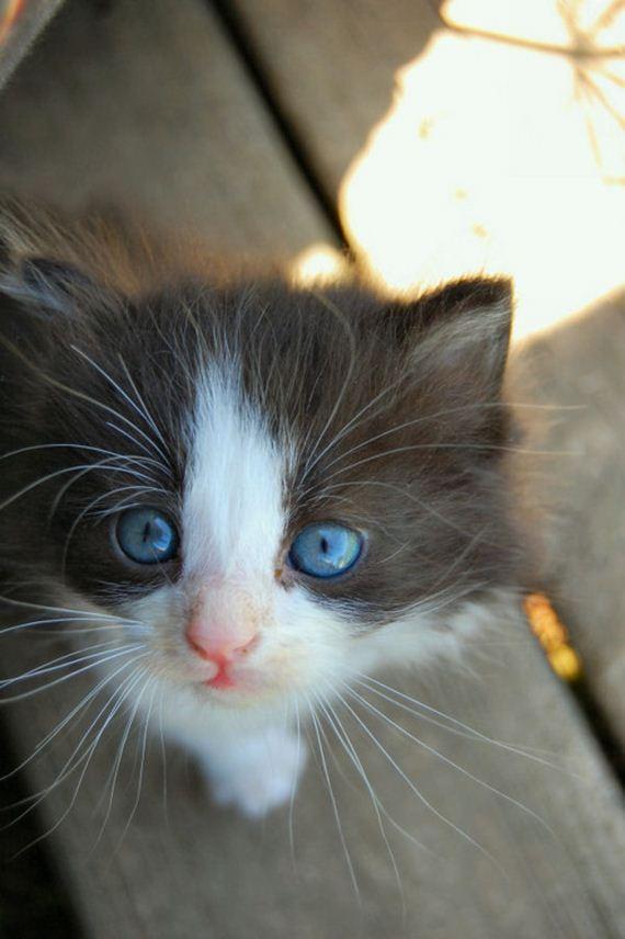 gatitos-crias-gatos-14